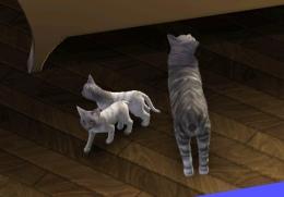 More kittens.